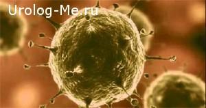 Вирусы ЗППП